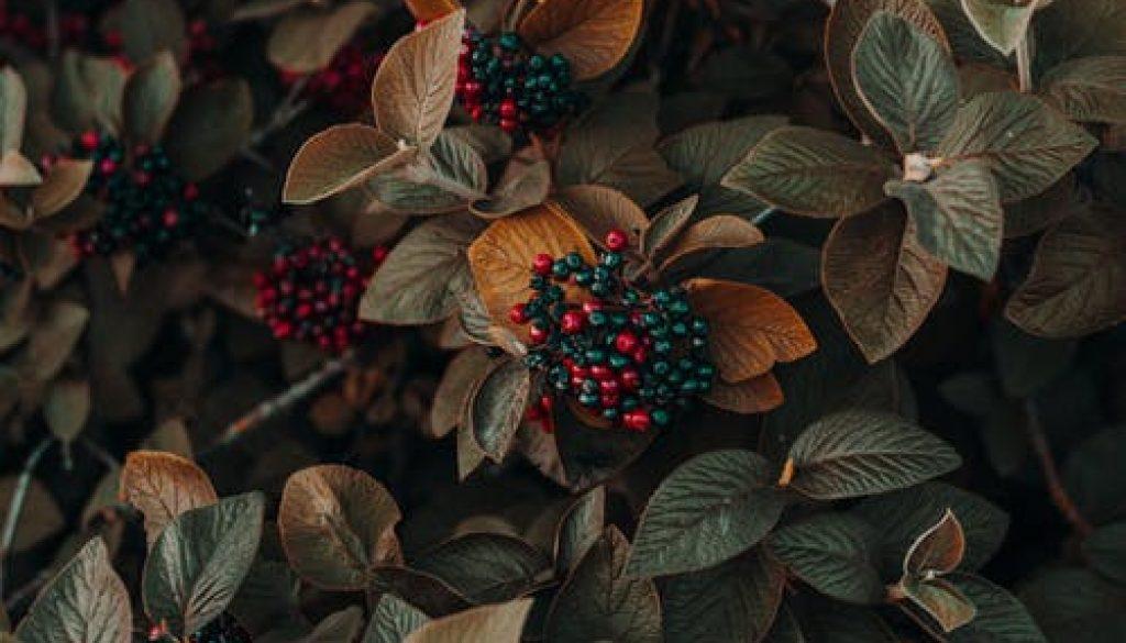 pexels-photo-1379636